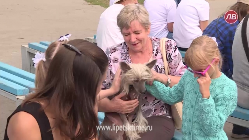 Желтая собака помогает особенным детям уже 5 лет