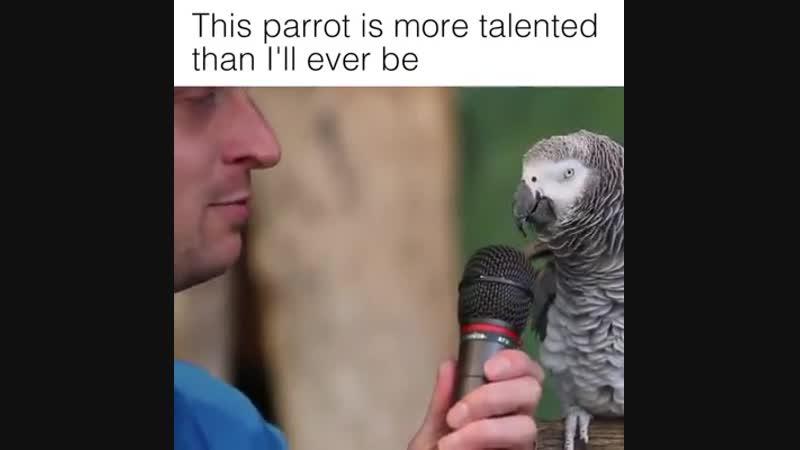 Интелектуальный попугай!