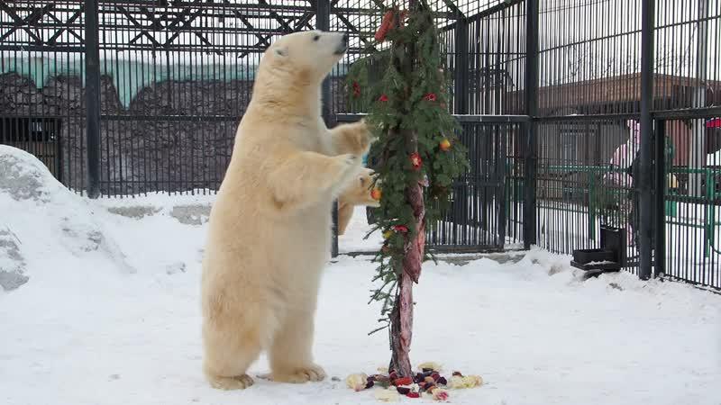 В Роевом ручье соорудили елку с рыбой для белых медведей