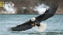 National Geographic Animals American Eagle Discovery Nature Wild Wildlife