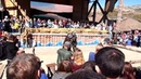 Рыцарский турнир в парке Викингов
