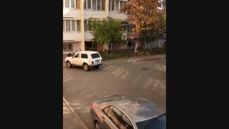 Сегодня на Ставропольской, 183 творится странное: кошек выбрасывают из окна. » Freewka.com - Смотреть онлайн в хорощем качестве
