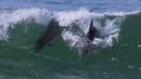 101 - Aquatic Dance - Vangelis (Oceanic)