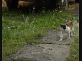 Бездомные кошки у одних вызывают жалость, у других раздражение.