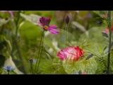 Bee Gees - Wildflower (HQ) + lyrics