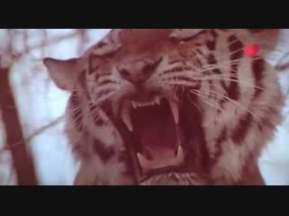 Тайны кино - Цирк в советском кино 2019