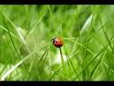 Bruit De La Nature Relaxation ♥ Bruit De La Nature Sans Musique ♥ Ambiance De La Nature