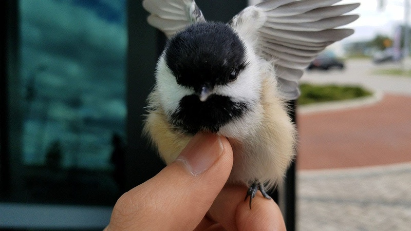 Am I a bird king now?