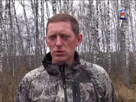 Голод заставил выйти из леса медведей в нескольких населенных пунктах Каратузского района