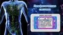 Лимфатическая система и профилактика биорезонансной терапией БРТ