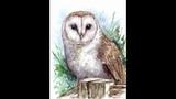 Barn Owl Time Lapse Watercolour
