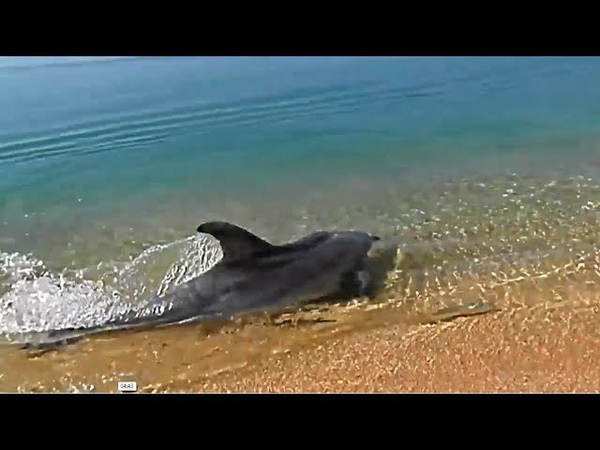 Dolphins are here, they are nearby. ) Where to swim with dolphins in wild nature.