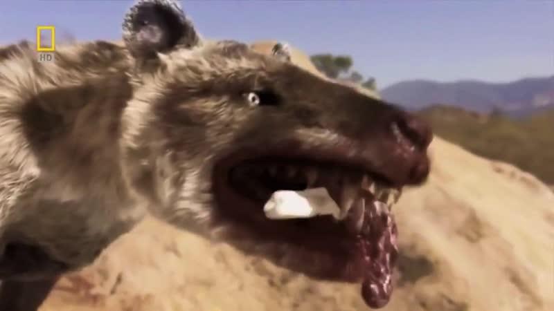 Доисторические хищники Гиенодон