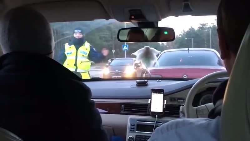 Как пройти алкогольную облаву в Эстонии Видео для внимательных rfr ghjqnb fkrjujkmye j kfde d 'cnjybb dbltj lkz dybvfntkmys rf