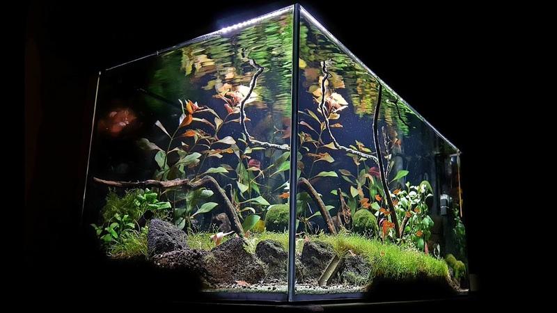 Aquael leddy 60 akwarium naturalne prezentacja