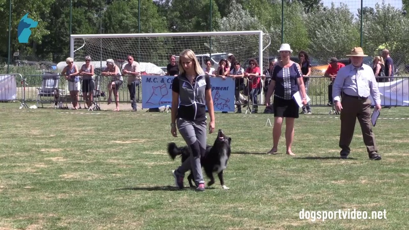 Selection - Valentina Balli Mind the Dog Lycan Border Collie