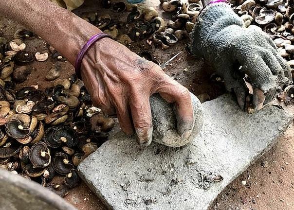 Чего стоит сбор кешью  обожженные руки за 2 фунта в день