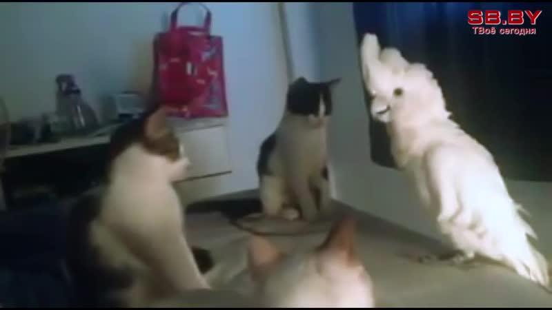 Попугай Кеша притворился котом
