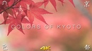 4K Colors of Kyoto / Autumn The Garden of Kyoto 京都の色・秋 4K 京都の庭園