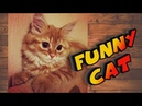Lifestyle or Funny Milka Cat