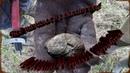 Нашли больше 100 старых монет в небитой деревне. В поиске старины !