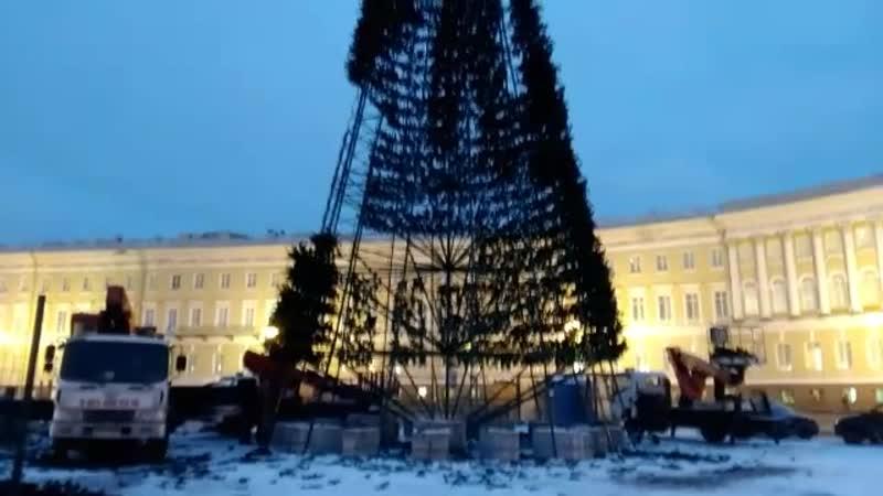На Дворцовой площади устанавливают главную елку Петербурга