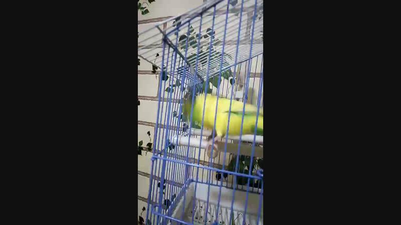 я и папугай