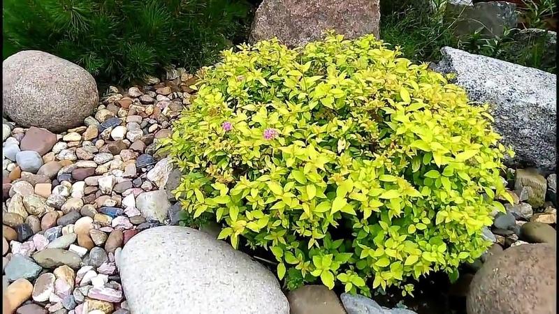 ДЕКОРАТИВНЫЕ РАСТЕНИЯ В СИБИРИ Украшение вашего сада