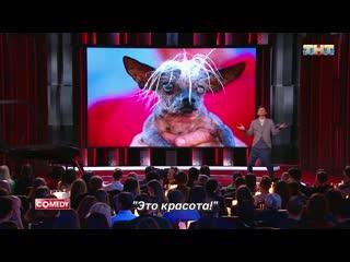 """""""comedy club"""" - про дорогие собакены"""