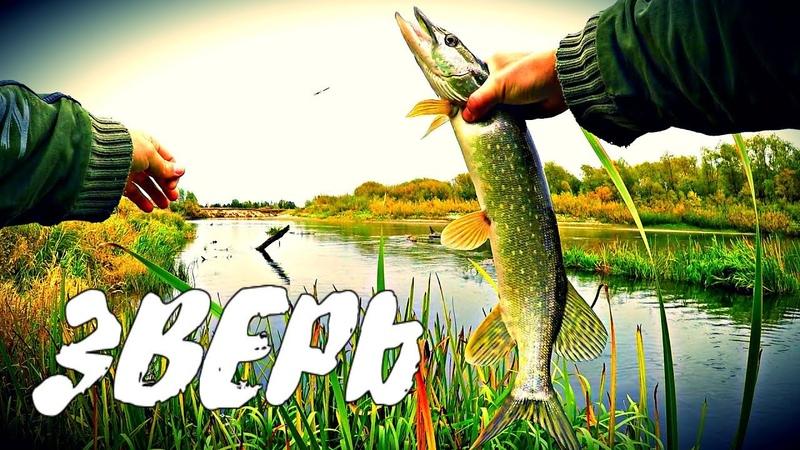 Рыбалка Осенью Рыбалка на спиннинг на реке Мокша Дикая атака ЩУКИ МОРДОВСКИЕ БУДНИ