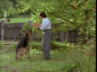 «Комиссар Рекс. Убийственное лето» (1995), реж. Удо Витте