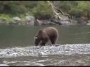 рыбалка на камчатке, медведь атакует