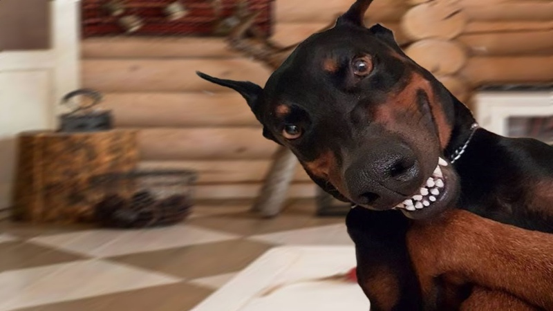 Dobermans are so different. NEW!