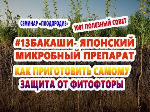 13БАКАШИ -ЯПОНСКИЙ МИКРОБНЫЙ ПРЕПАРАТ КАК ПРИГОТОВИТЬ ПОЛЕЗЕН ДЛЯ ЗЕМЛИ ЖИВОТНЫХ НЕТ ФИТОФТОРЕ
