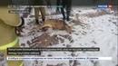 Новости на Россия 24 В Иркутске спасли косулю застрявшую в железном заборе Видео