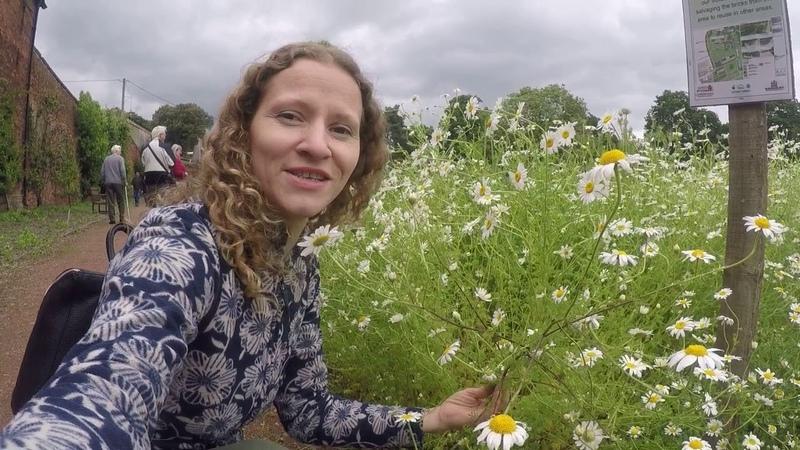 Полевые цветы Англии и мои планы в России