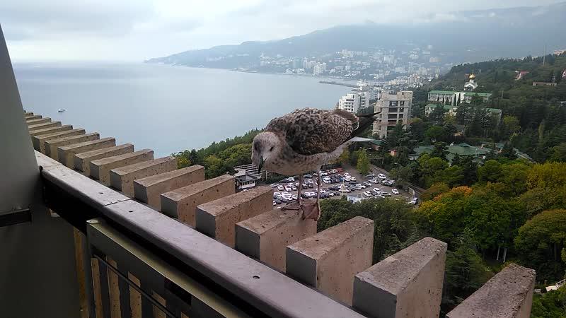 Как чайки прилетели к нам позавтракать