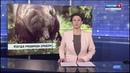 Медведи атакуют посёлки Карелии