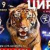 Цирк Тольятти | Бенгальские Тигры
