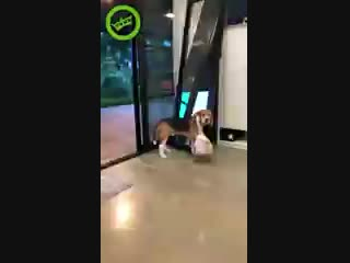 Гусь и собакен