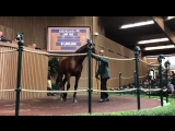 The second foal out of Champion Dayatthespa brings 1.6 million to lead the way at keesept. John Gosden signed the ticket on Meda