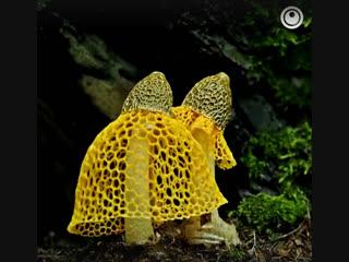 Mushroom Bloom Timelapse