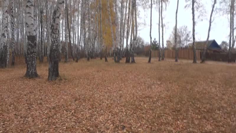 Пустельга Тайлер Прилёт на перчатку 50м