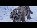 великий тигр