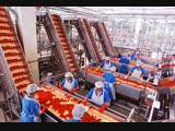 Сортировка овощей Работа в Польше