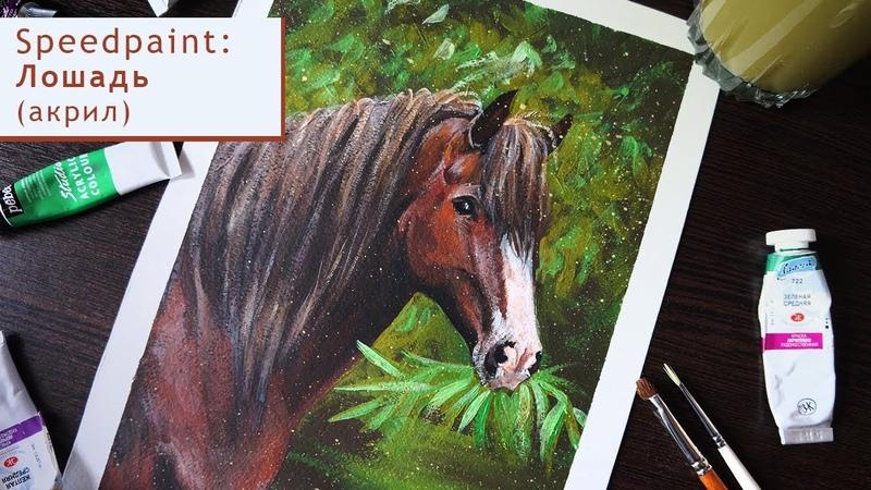 Рисую лошадь акрилом I draw a horse with acrylics Speedpaint