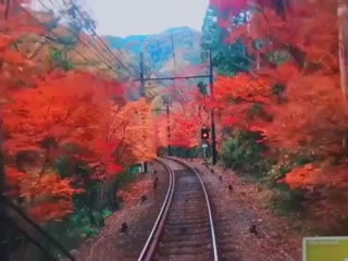Visit Japan AU  NZ в Instagram «If youre visiting Kyoto this autumn and want to take in the spectacular, colourful scenery, make