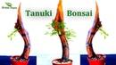 How To Make A Tanuki Bonsai Chinese elm Tanuki Bonsai bonsai trees for beginners GREEN PLANTS