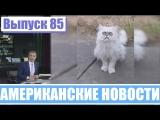 Hack News - Американские новости (Выпуск 85)