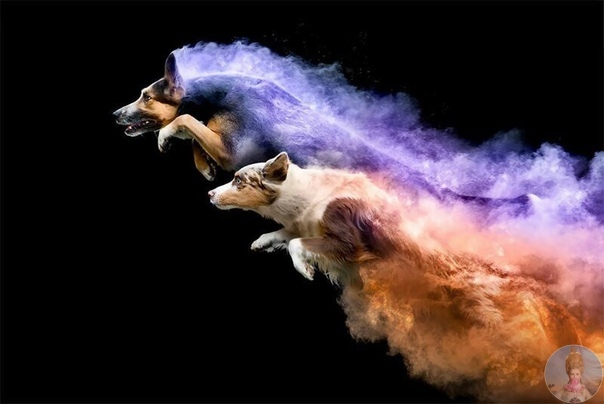Канадский фотограф Джесс Белл любит собак, и пригласила своих друзей с питомцами на креативную фотосессию в порошковых